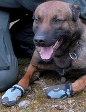 German police dog in shoes